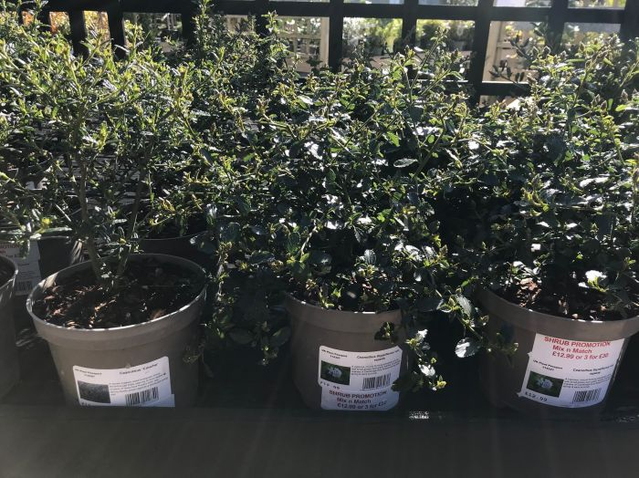 Selected Shrubs